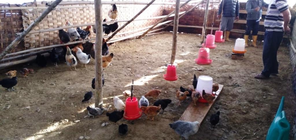 Poulailler, distribution alimentation et eau